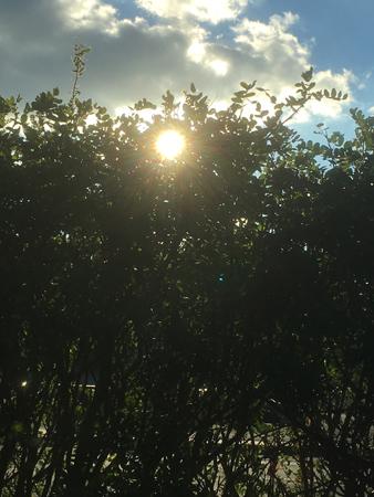 Solen bakom buskarna