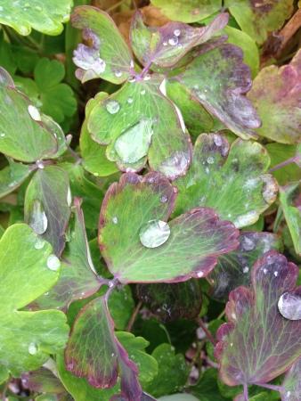 Droppar på små gröna blad