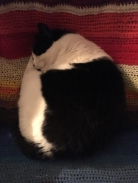 Mini sover i min skrivbordsstol
