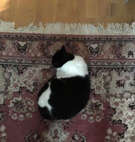 Mini på mattan i bokrummet