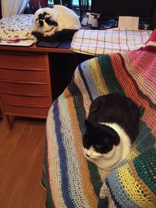 Citrus och Mini vid skrivbordet