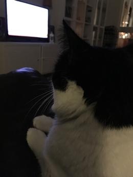 Mini ser på TV