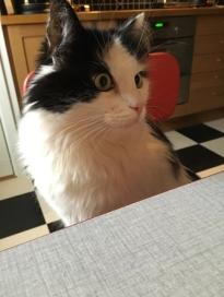 Lucifer vid frukostbordet