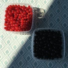 Röda och svarta vinbär