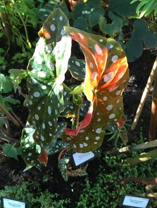Prickigt och färggrant i Tropiska växthuset