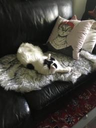 Citrus sover på soffan med ryggen mot kameran