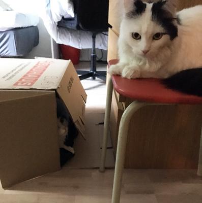 Lucifer i lådan Citrus på en stol