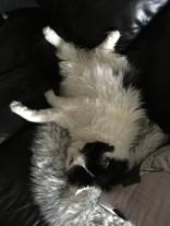Lucifer manspreadar i soffan